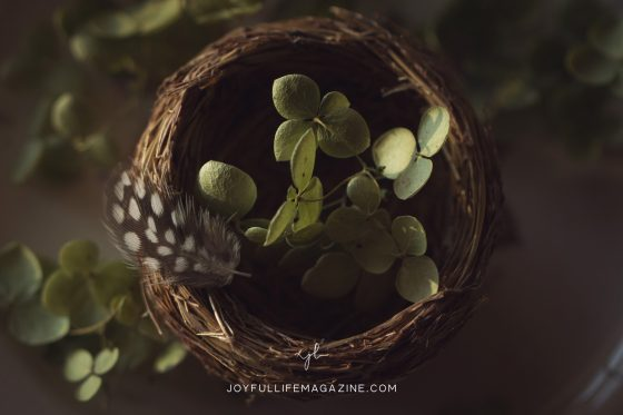 The Ache of An Empty Nest | by Tamela Turbeville | The Joyful Life Magazine