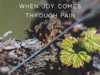 a branch with new leaves growing on it | Joy in Suffering: Is the Promise Actually Worth the Pain?