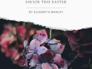A purple flower | The Comfort of God - Find Joy in Jesus