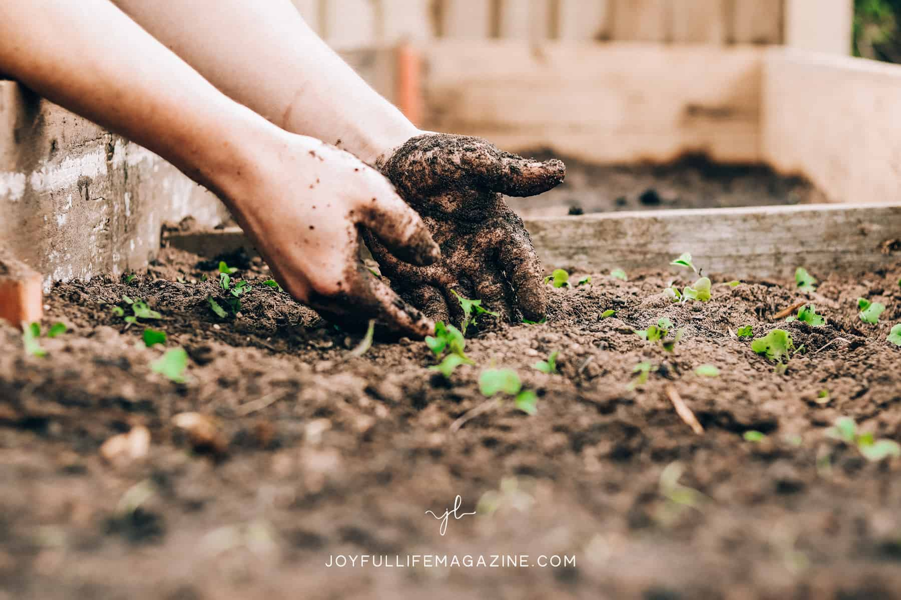 Hands reaching into soil.