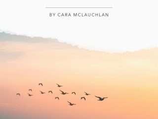 birds flying over sunset ocean