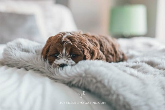 puppy cuddling in bed