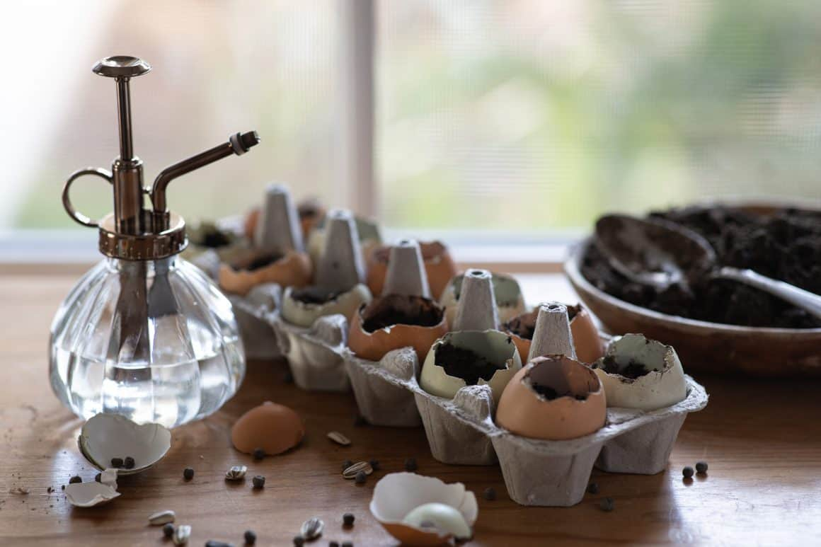 watering can next to soil in egg shells