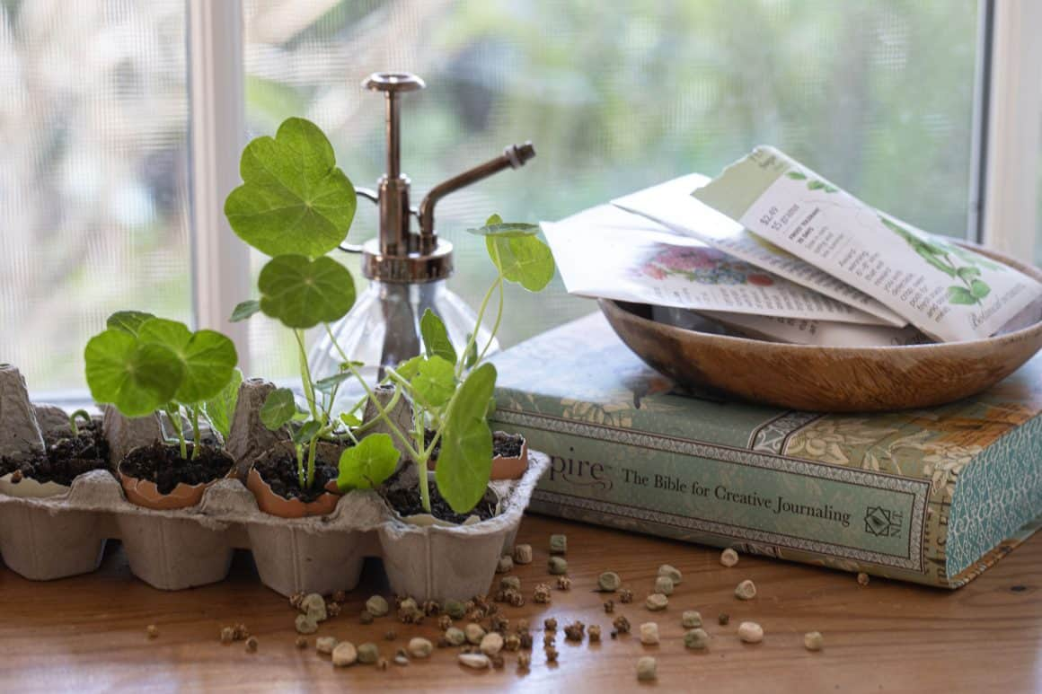 watering can next to plants in egg carton