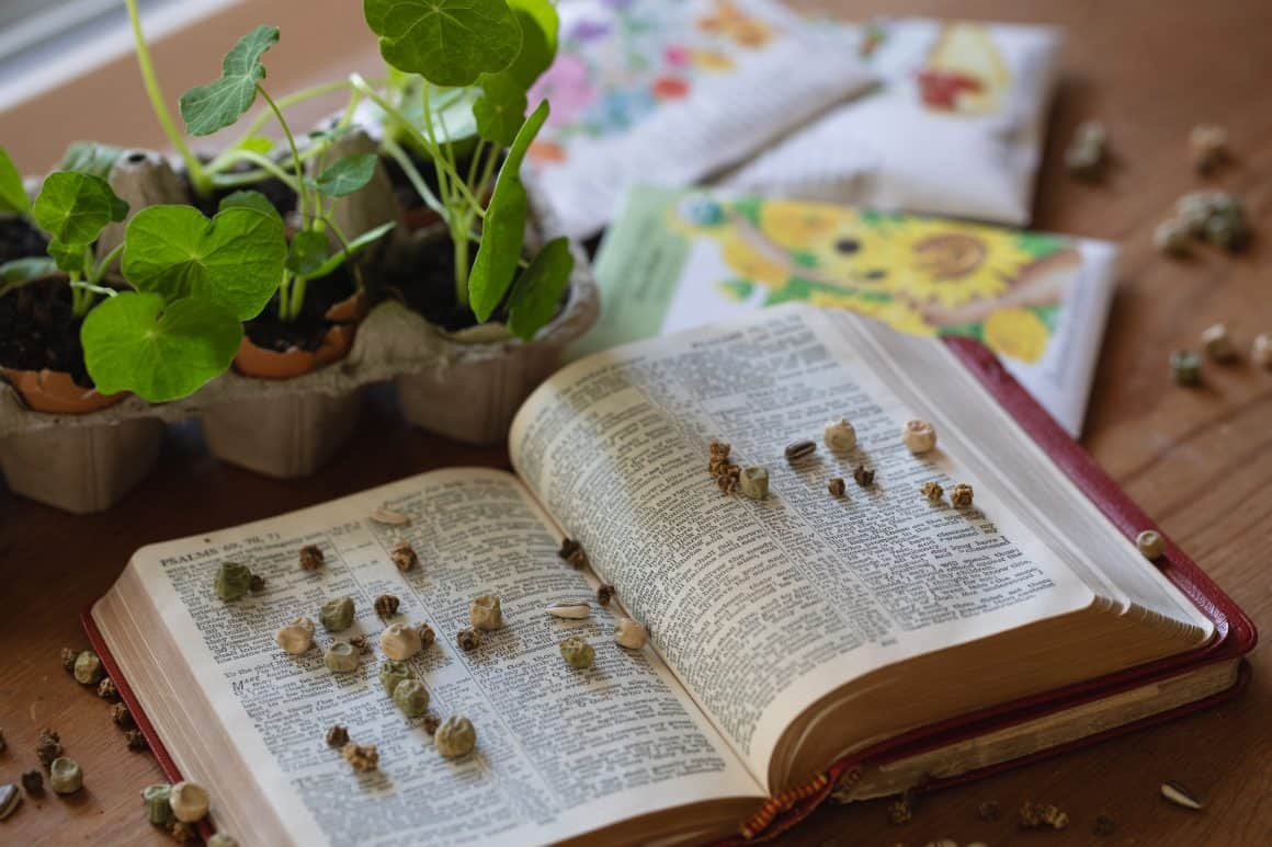 seeds on bible next to plant