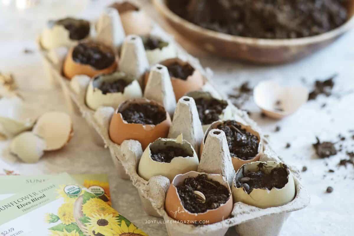 planting soil in egg cartons